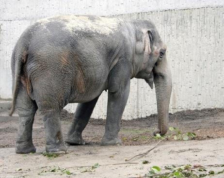elephant21.jpg