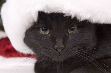 blackcatchristmas3.jpg