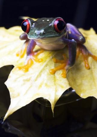 frog1.jpg