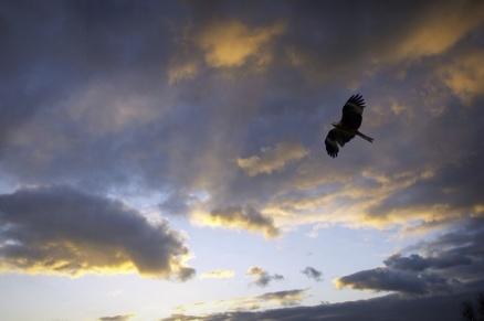 hubrisblackbird.jpg