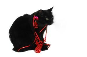 blackcatchristmas2