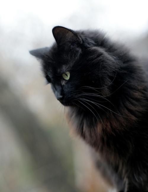 blackcatfluffy