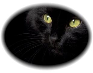 blackcatmatt
